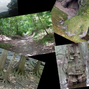 spirit tree collage pic